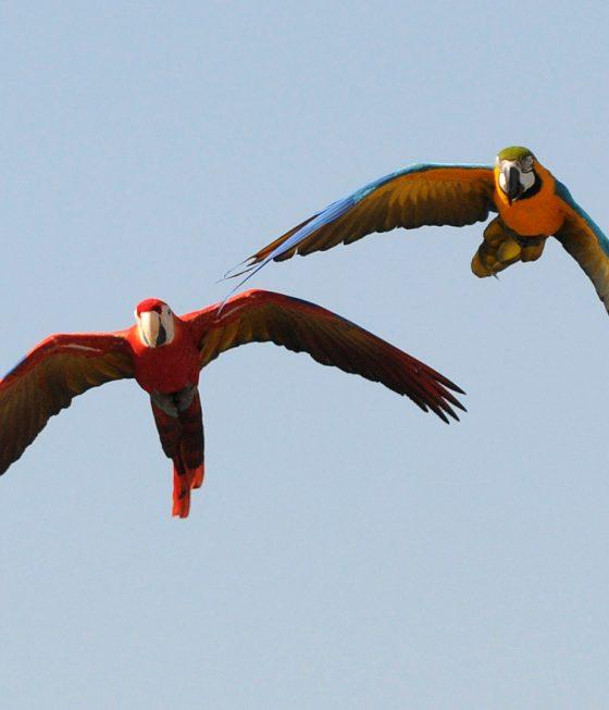Free Flight Demonstrations parrots