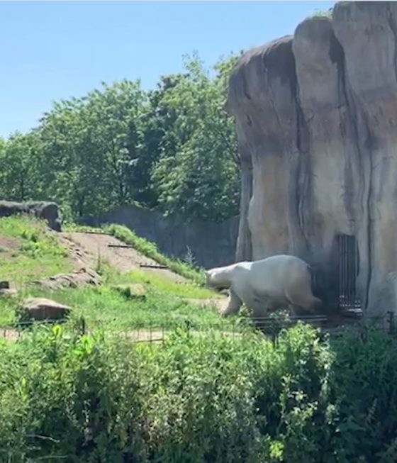 Rotterdam Zoo: one of Europe most beautiful zoos