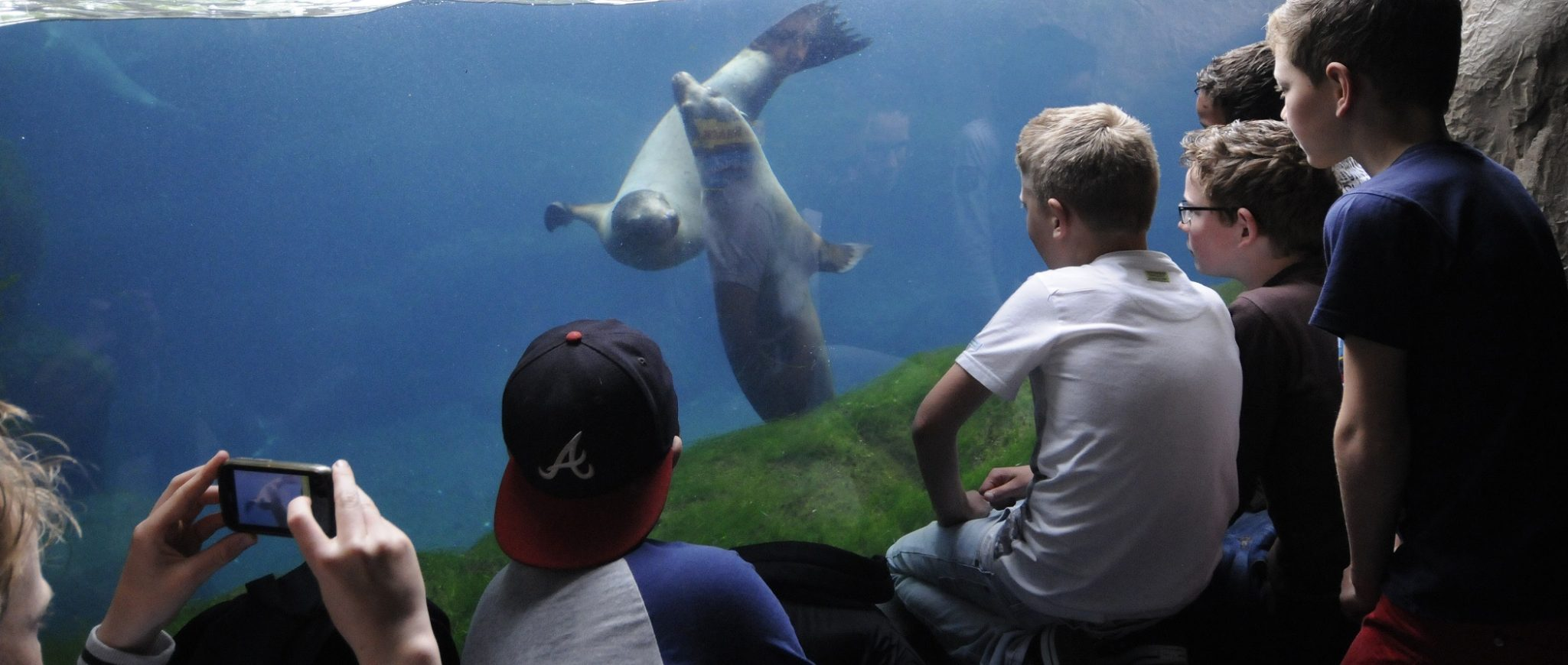 boys meet sea lions