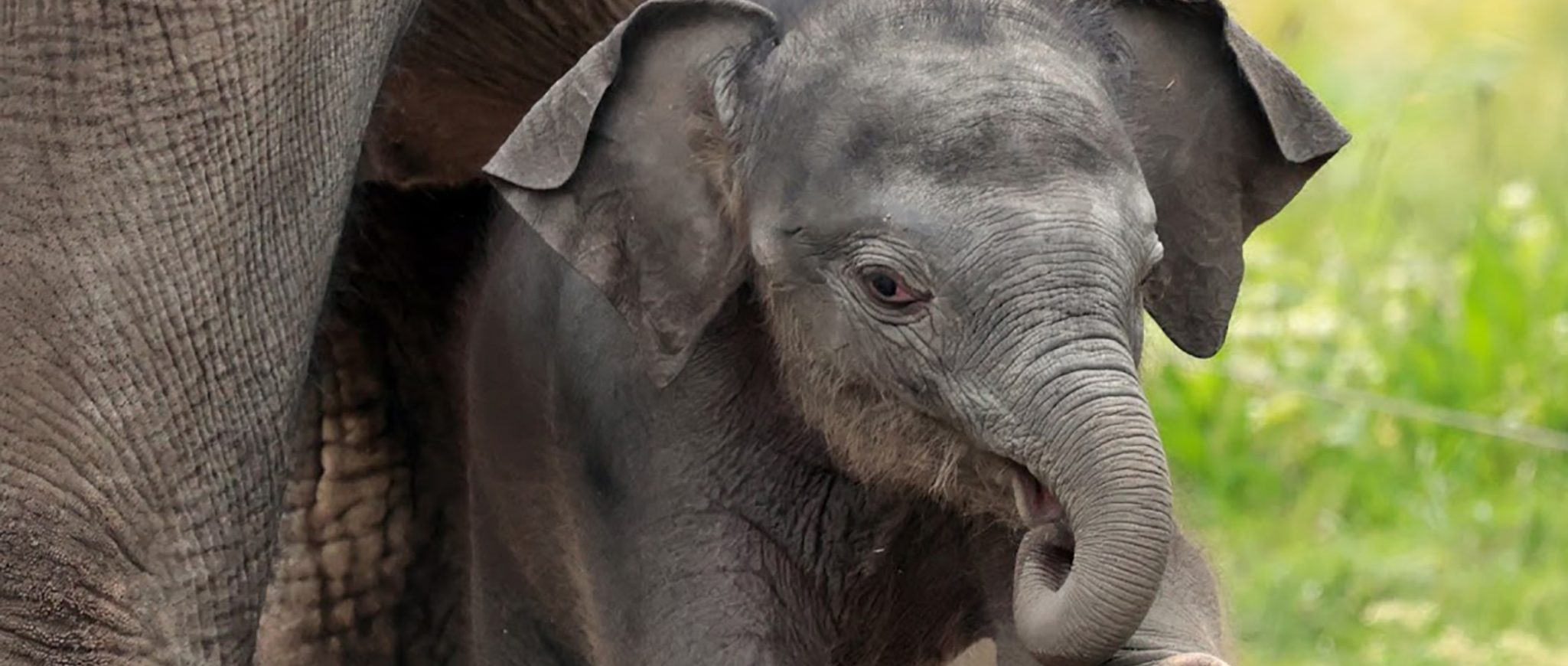 baby elephant born in May 2021