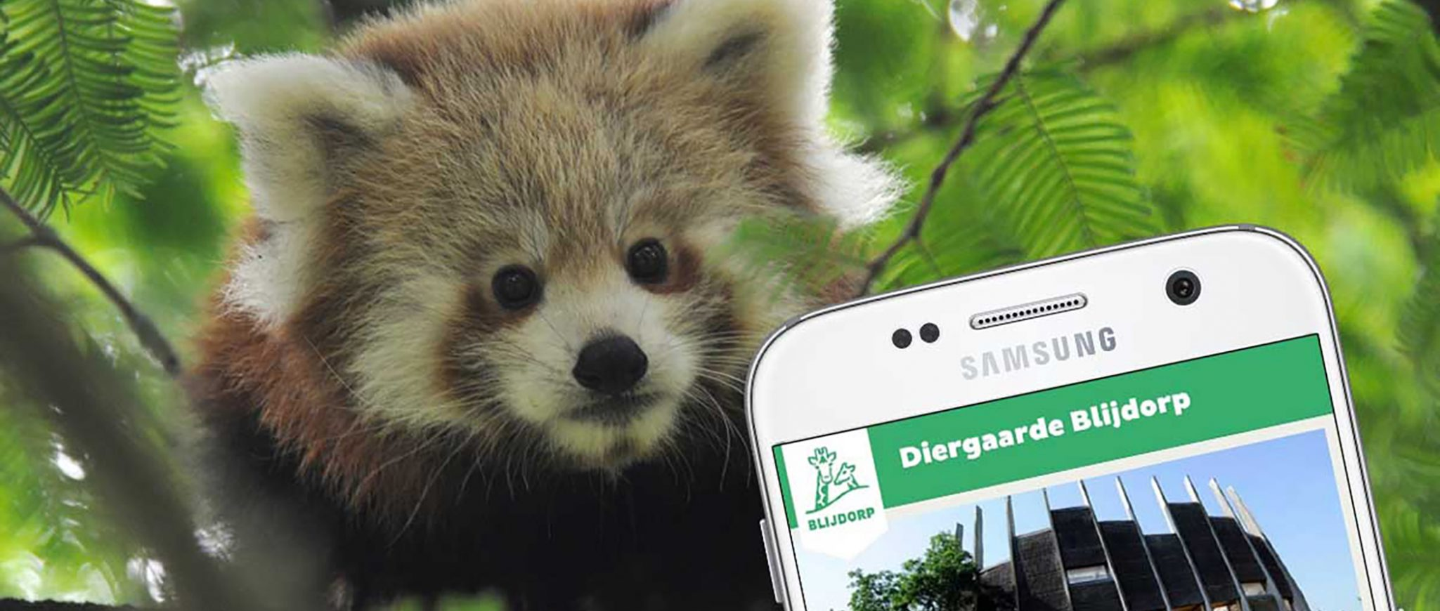 disover more in our zoo with the free Blijdorp app