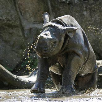 mara zwart neushoorntje net uit bad