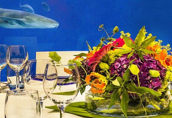 Dineren met uitzicht in het haaienbassin