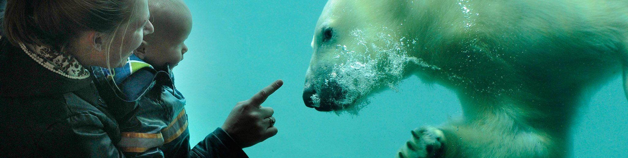 kind en ouder bekijken ijsbeer onder water van heel dichtbij