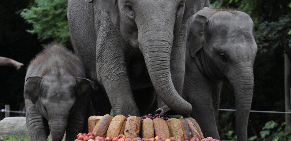 verjaardagstaart bij de olifanten