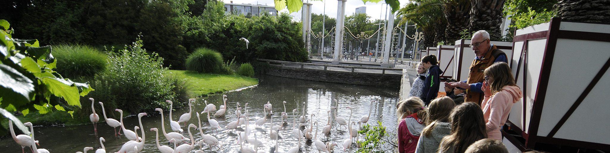 rondleiding van kinderen bij flamingo's