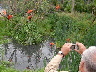 Bewonder de rode ibissen in hun groene en waterrijke omgeving