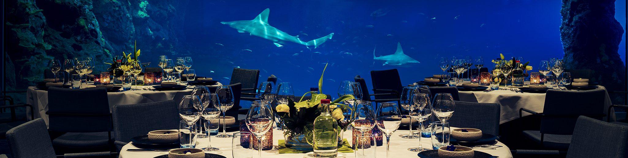 locatie met uitzicht op de haaien