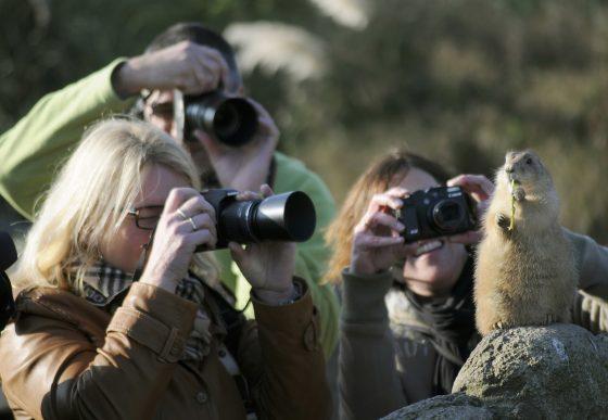fotografen omringen prairiehondje