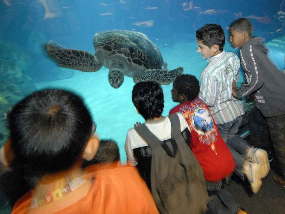 zeeschildpad in de Haaientunnel Oceanium kinderen
