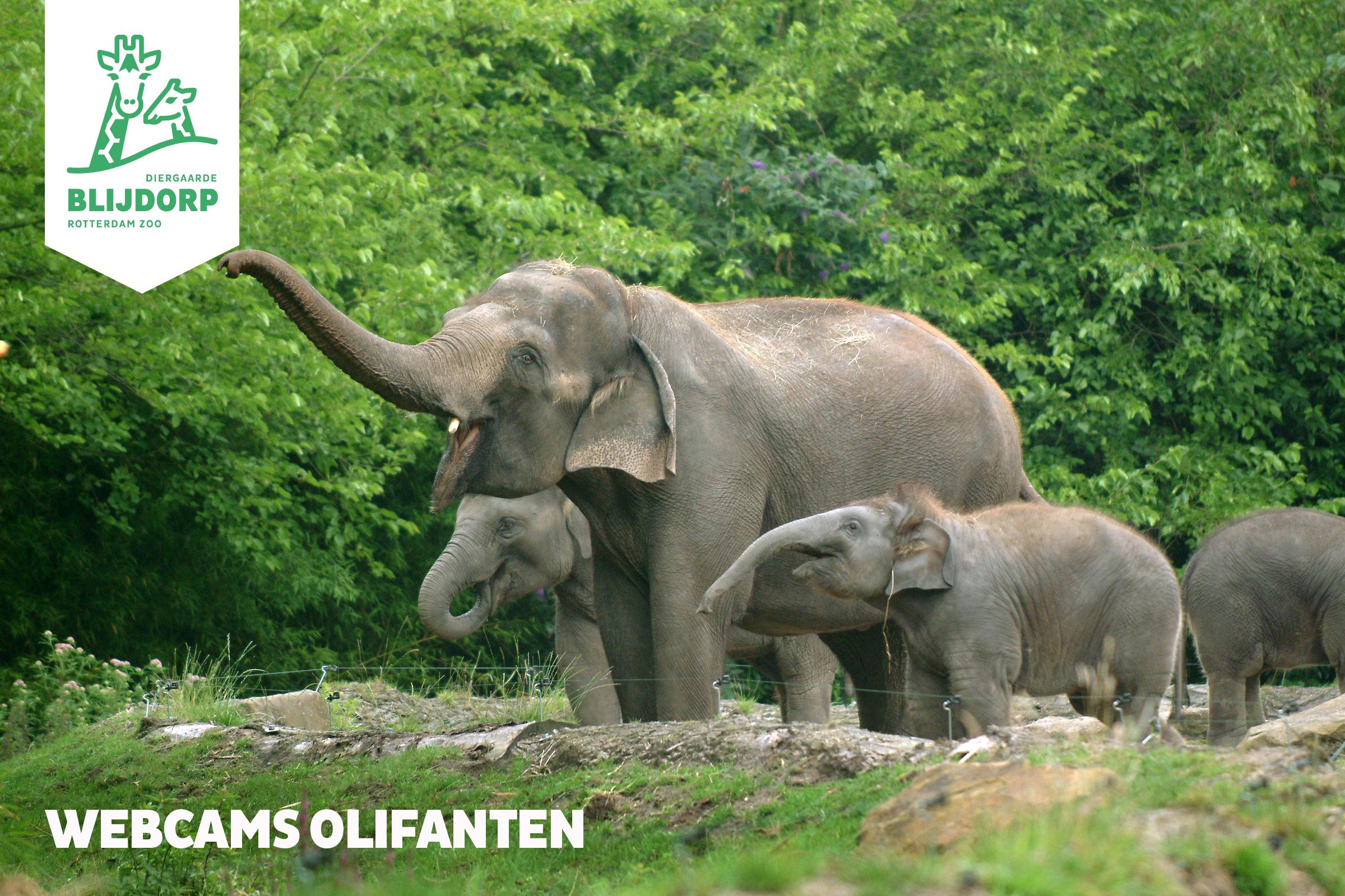 hoeveel kilo eet een olifant
