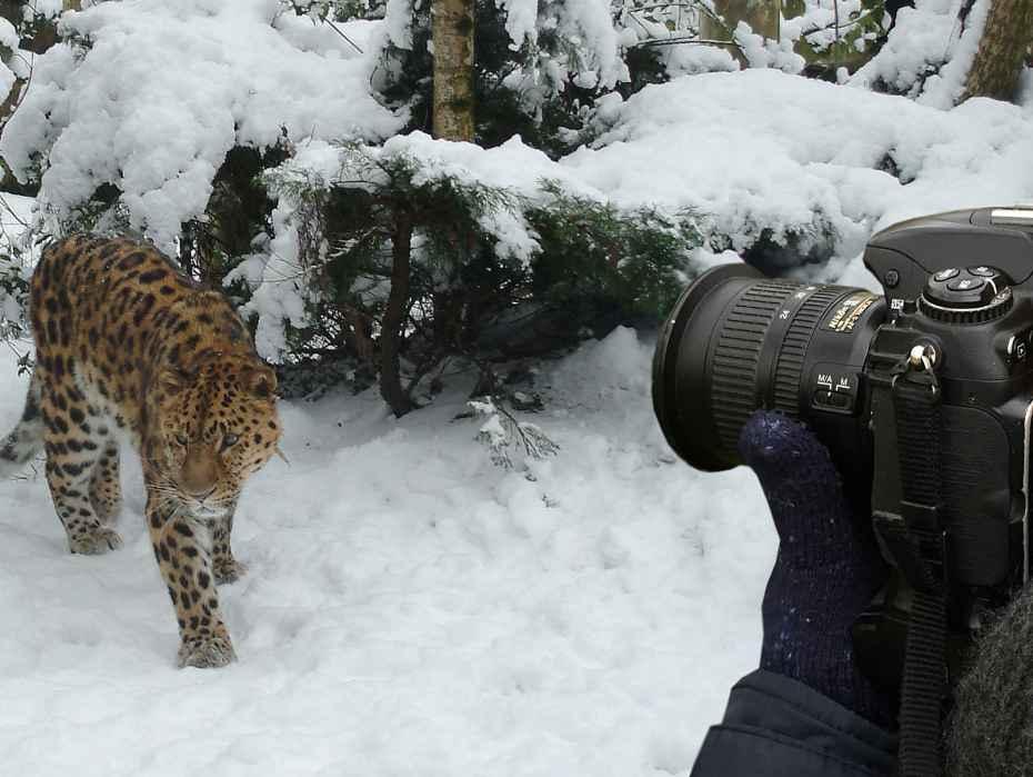 fotograaf met amoerpanter in de sneeuw