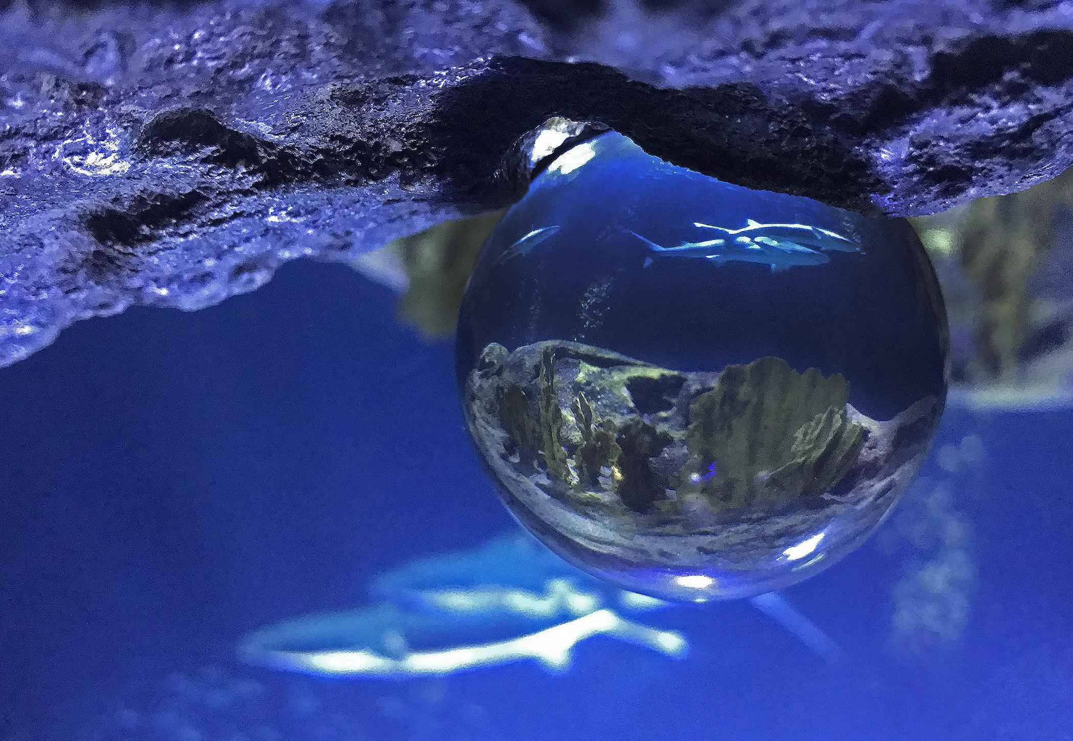 foto door glazen bol in haaienbassin