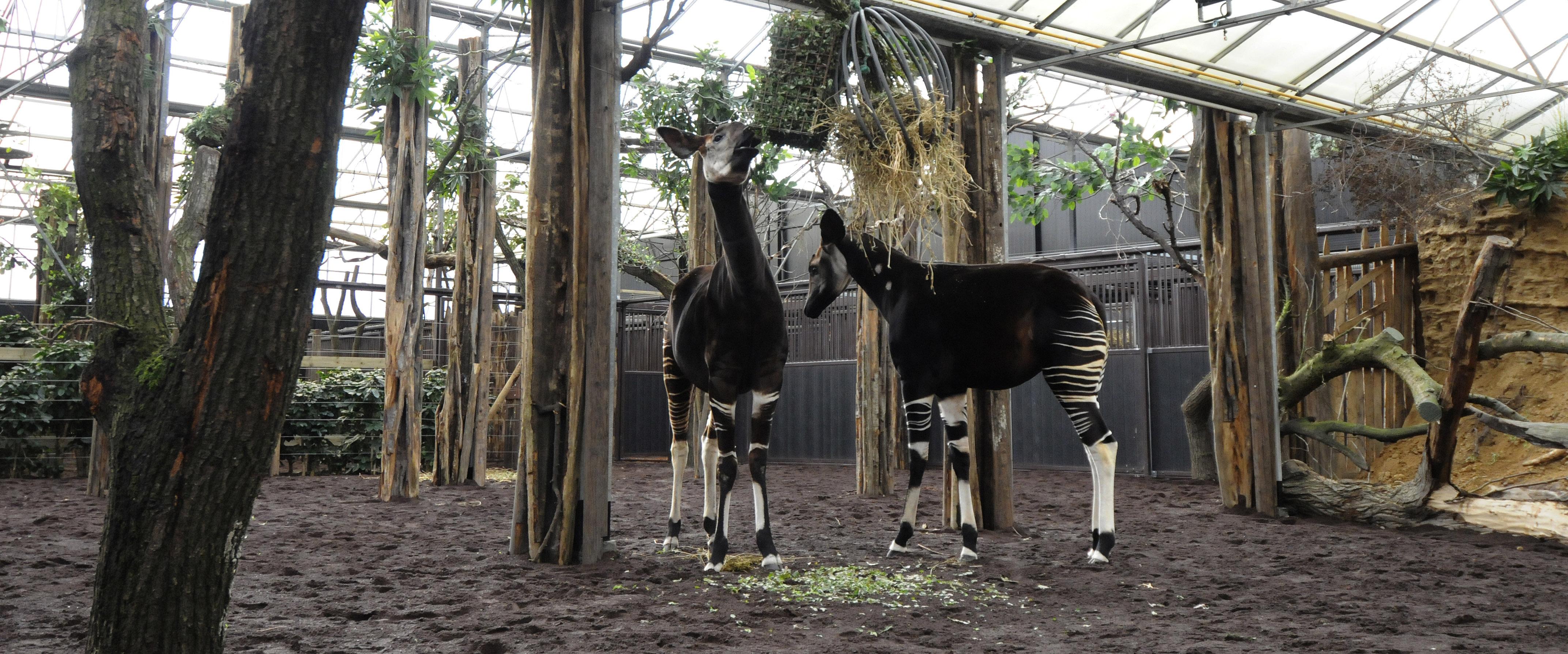 blijdorp zoo korting