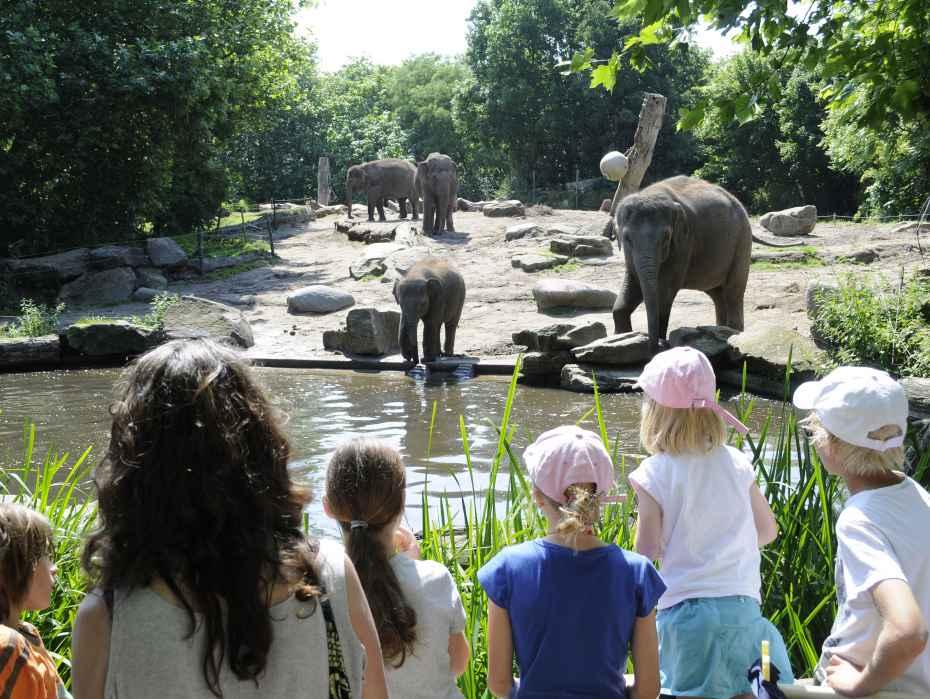 olifant met jong olifanten met publiek zomer 2012
