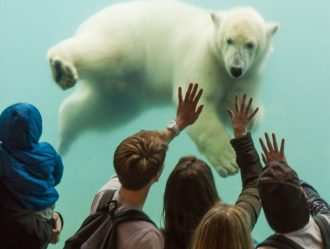 ijsbeer onder water bekijkt het publiek... of andersom?