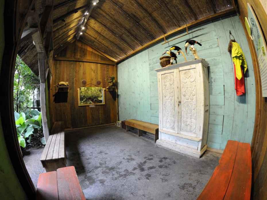 amazonica-lokaal