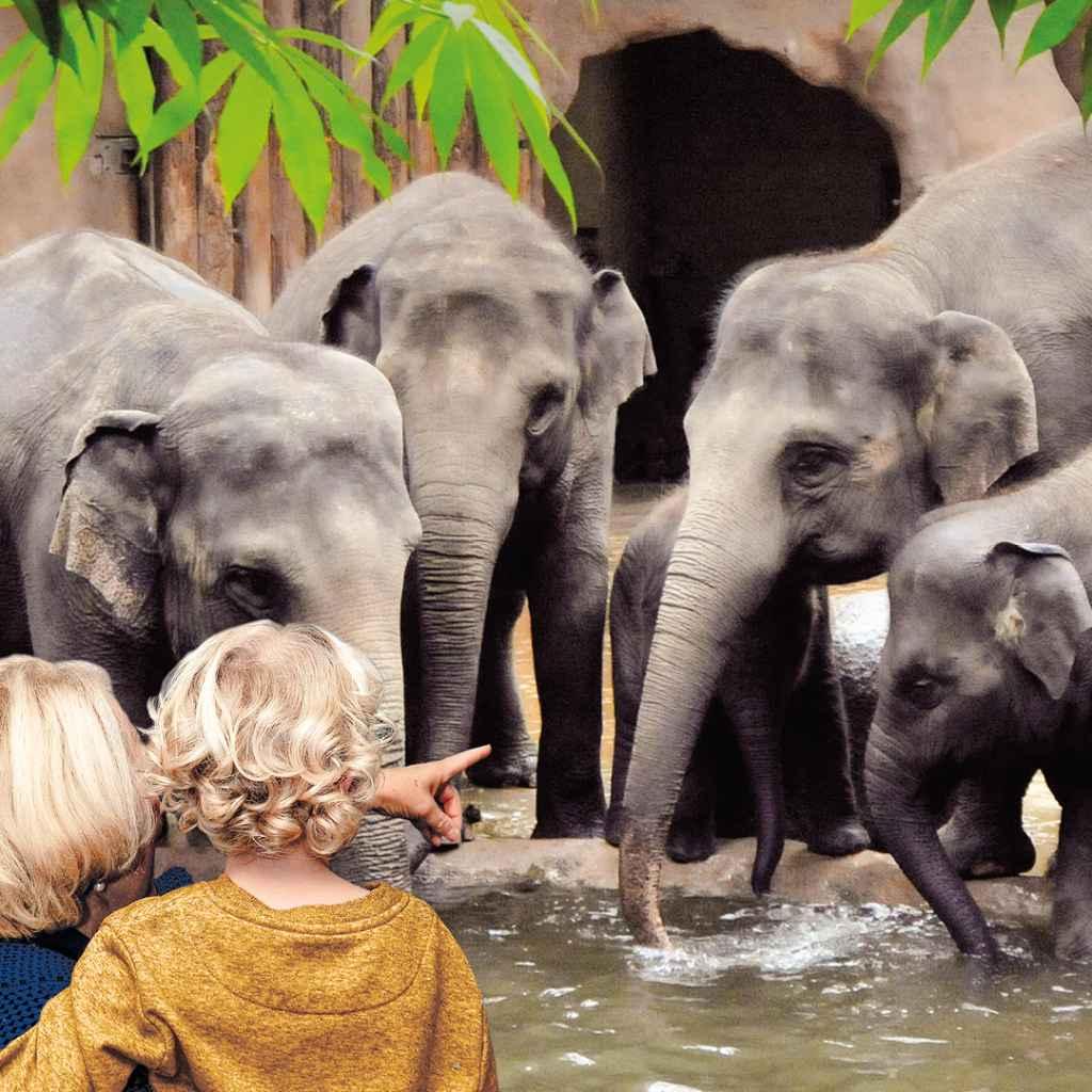 161206_blijdorp_insta_1080x1080_v2_olifanten