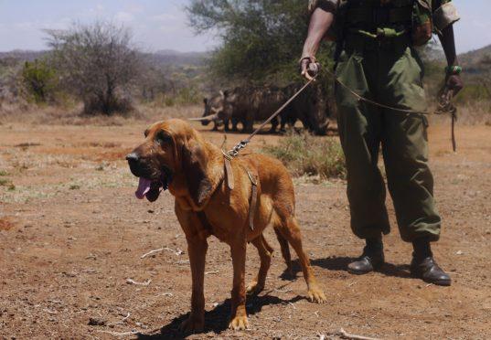 rhino dog squad