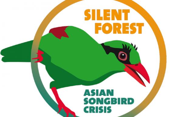 logo silent forest