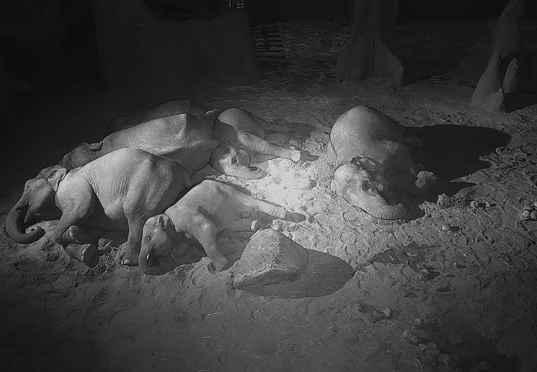 screenshot Aziatische olifanten slapend in de nacht
