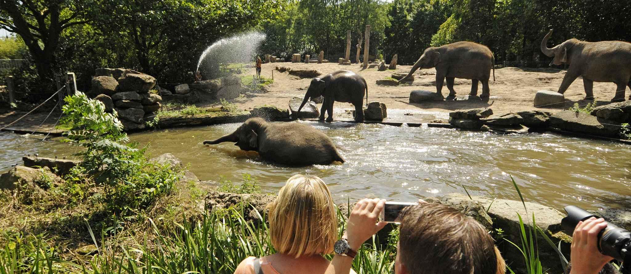 Aziatische olifanten en publiek