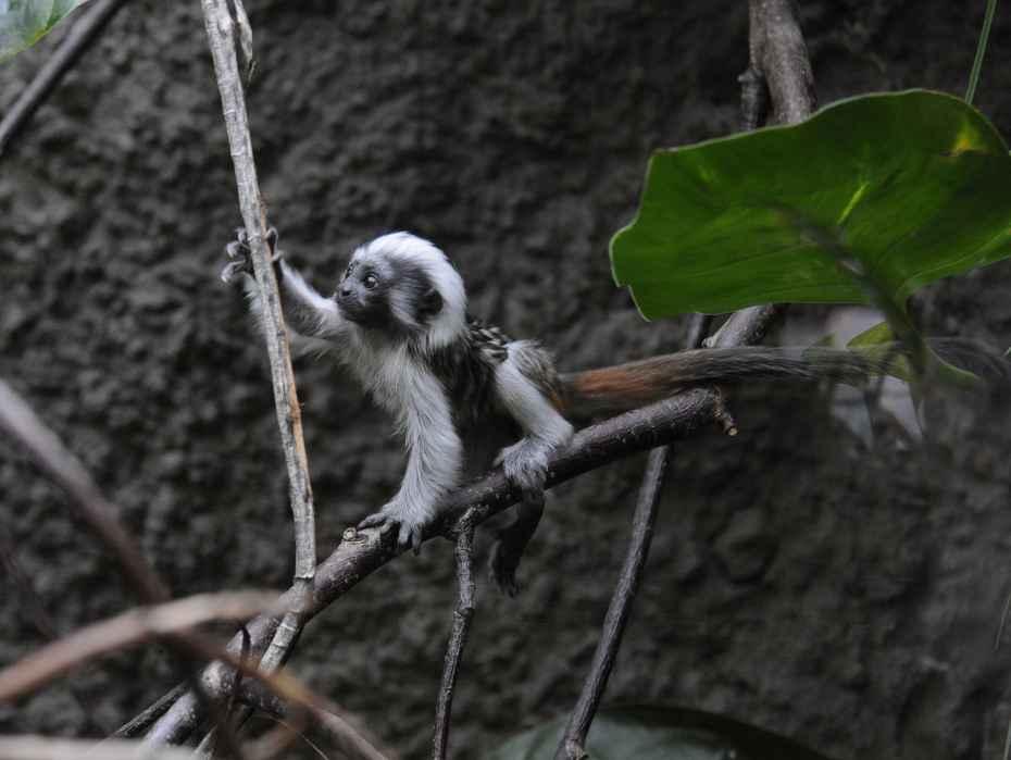 pinche-aapje op avontuur