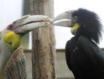jaarvogels geven besje aan elkaar