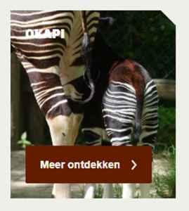 dierdossier okapi