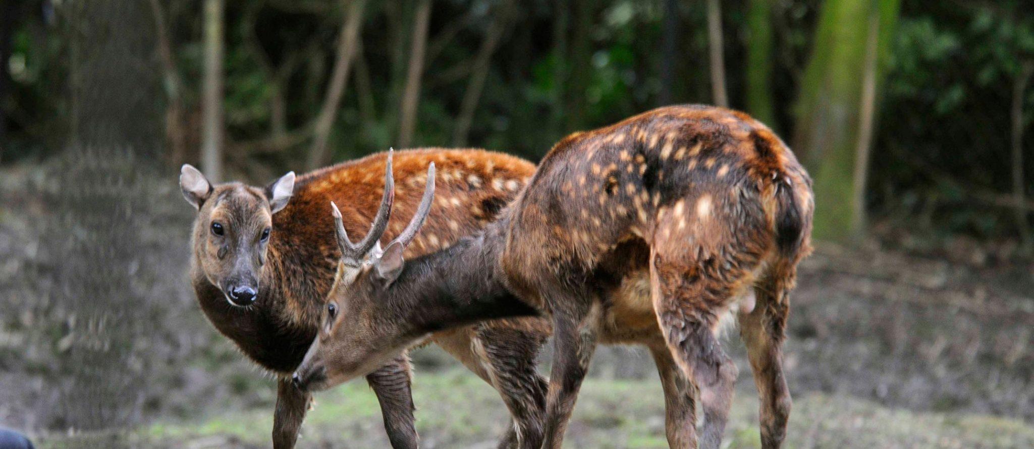 prins alfred herten man en vrouw bij elkaar