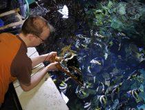 verzorger voert tropische vissen met Vegan visvoer