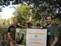 Vereniging Vrienden van Blijdorp adopteren olifant Irma