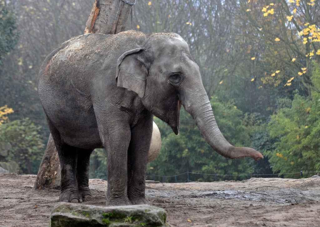 olifant irma