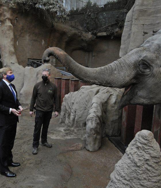 ZKH Willem-Alexander op werkbezoek in Diergaarde Blijdorp (bij olifanten)