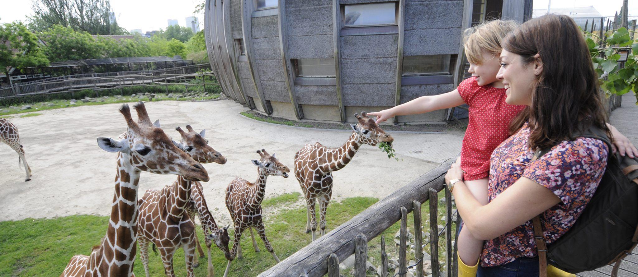 moeder en dochter kijken naar giraffen en andersom
