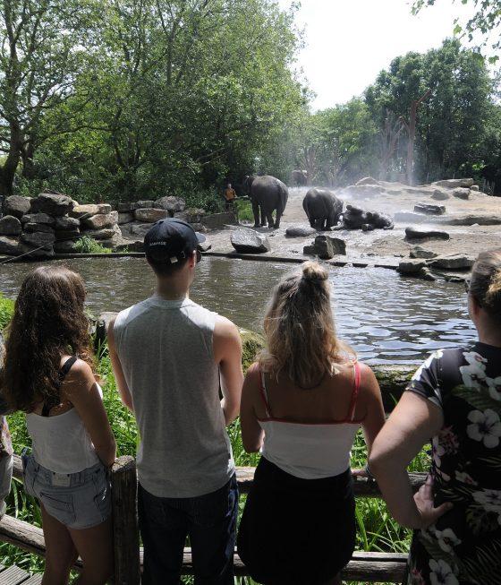 publiek / bezoekers bij het buiten verblijf van de olifanten
