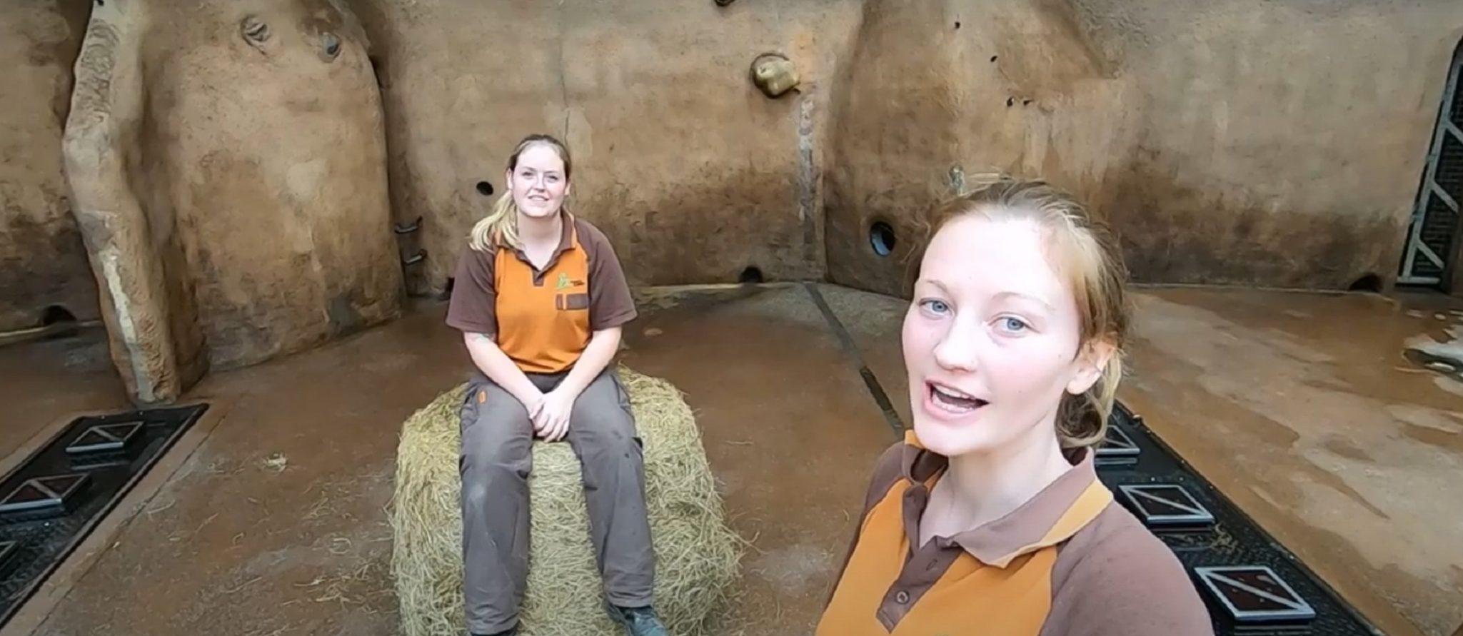 dierverzorgers vloggen bij de olifanten