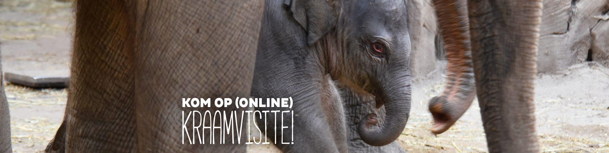 pasgeboren olifantje 2021