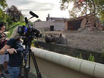 filmploeg bij de zwarte neushoorn