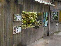 terrarium in Amazonica