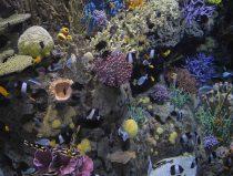 vernieuwde aquaria Great barrier reef met kunst koralen